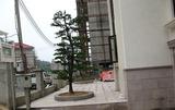 街道树木种植
